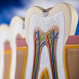 Gengivite e parodontite: reversibilità e irreversibilità